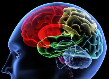 Magnesio y cerebro